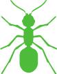 Tweed Heads Pest Control - ants