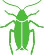Tweed Heads Pest control - cockroach